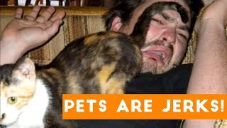 Animals are Jerks Funny Pet Compilation | Funny Pet Videos