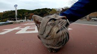 港のバス停で待っている人にモフモフを要求する野良猫