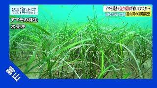 2017年 #32 富山湾の藻場調査 | 海と日本PROJECT in 富山