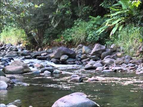Les belles eaux de Guadeloupe  Rivière Bonfils à Goyave 97128 Guadeloupe