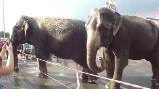 слоны видео для детей смотреть онлайн. В Мире Детей!
