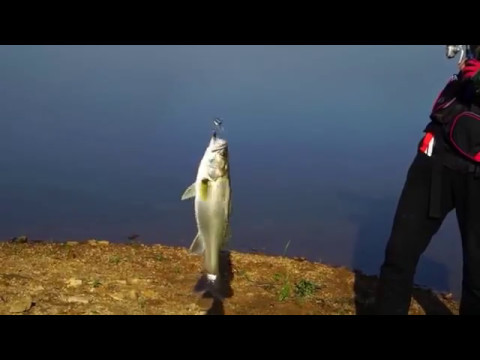 Bass Fishing Rod Pole With Baitcasting Spinning Reel Combo In Lake Pond Trout Video