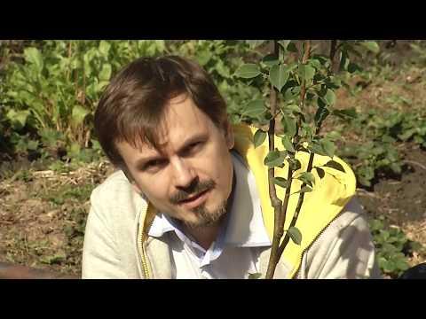 Осенняя посадка саженцев плодовых деревьев и кустарников