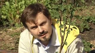 видео Посадка деревьев и кустарников