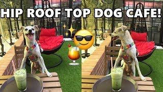 HIP ROOF TOP DOG CAFE IN KOREA! CUTE DOG VLOG! | HAPPY DOGGY HAPPY