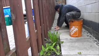 Landscaping Diy-filling Blank Areas With Gravel-make Your Backyard Look Better
