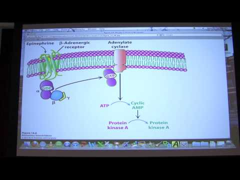 #18 Biochemistry Signaling I Lecture for Kevin Ahern's BB 450/550