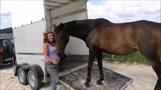 Gambar cover Nach Drama: Traumatisiertes Pferd wird in Pferdeanhänger verladen: Horsemanship-Strategien und mehr