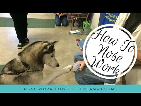 Nose Work - How to start training your dog - DreamK9.com