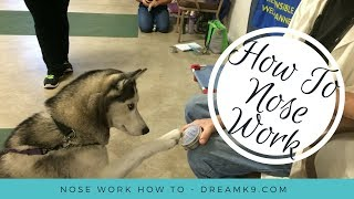 How To Teach Nose Work - Dreamk9.com