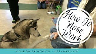 Nose Work - How to start training your dog - DreamK9.com