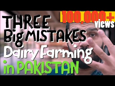 Warning: Dont make these 3 Big Mistakes in Dairy Farming - ڈیری فارمنگ  -- Ur/Hi