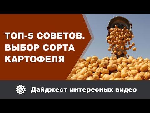 Топ 5 советов. Выбор сорта картофеля