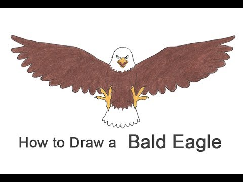 How To Draw A Bald Eagle Cartoon Youtube