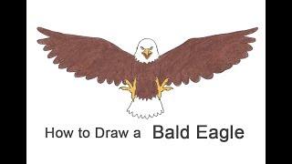 How to Draw a Bald Eagle (Cartoon)