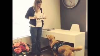 Good Dog! Drake Reads!