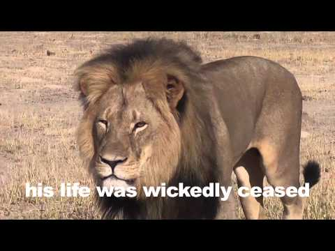 Cecil The Lion Strikes Back!