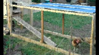 Tips On Building Chicken Runs And Coops | Helpful Tips To Building & Placing Chicken Runs And Coops