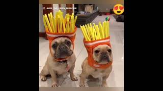 FUNNY DOGS COMPILATION|LOVELY DOGS|CUTE DOGS|PART 2