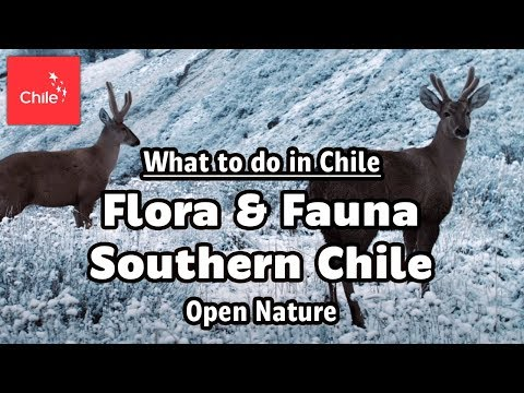 What to do in Chile: Flora & Fauna Southern Chile - Open Nature