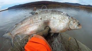Рыбалка сетями, Осенний СИГ