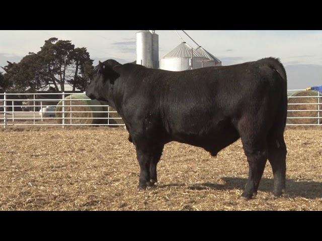 Express Ranches Lot 262
