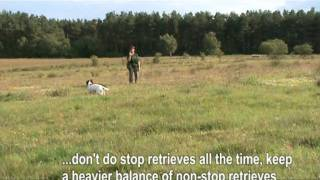 Gundog Training - Spaniel Teaching Stop On A Retrieve Using The Whistle (for All Commands)