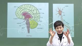 정혜심의 의학이론 암기 완전정복반 - 2