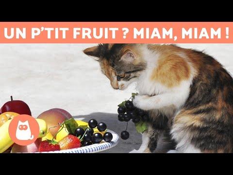 Les MEILLEURS FRUITS Pour Chats - Doses Et Bienfaits