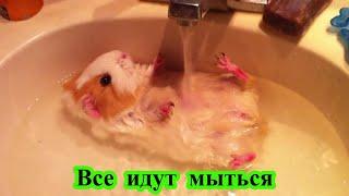 Все идут мыться (нарезка видео о животных)