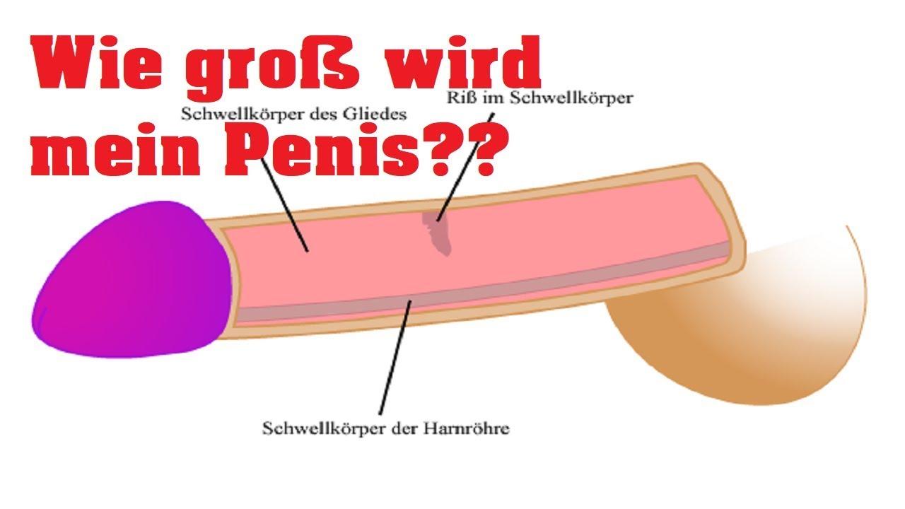Ab wann ist ein penis groß