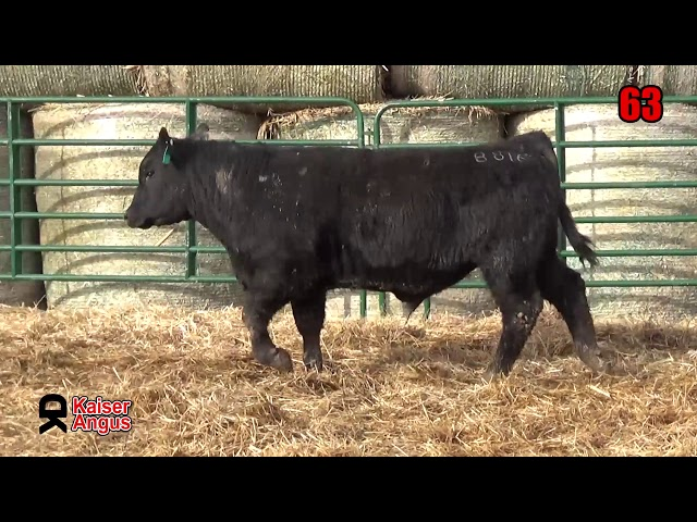 Kaiser Angus Ranch Lot 63