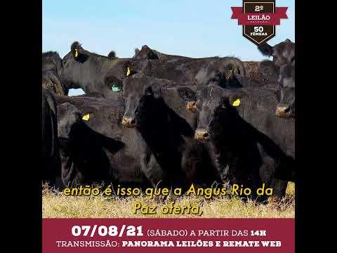 Filme 4  LEILAO 2020 Angus Rio da Paz