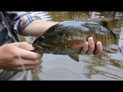 Smallie Madness!!!! (Little Juniata River Bass Fishing)