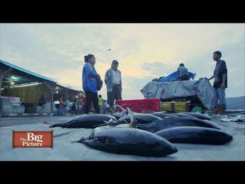 The Big Picture: Overfishing
