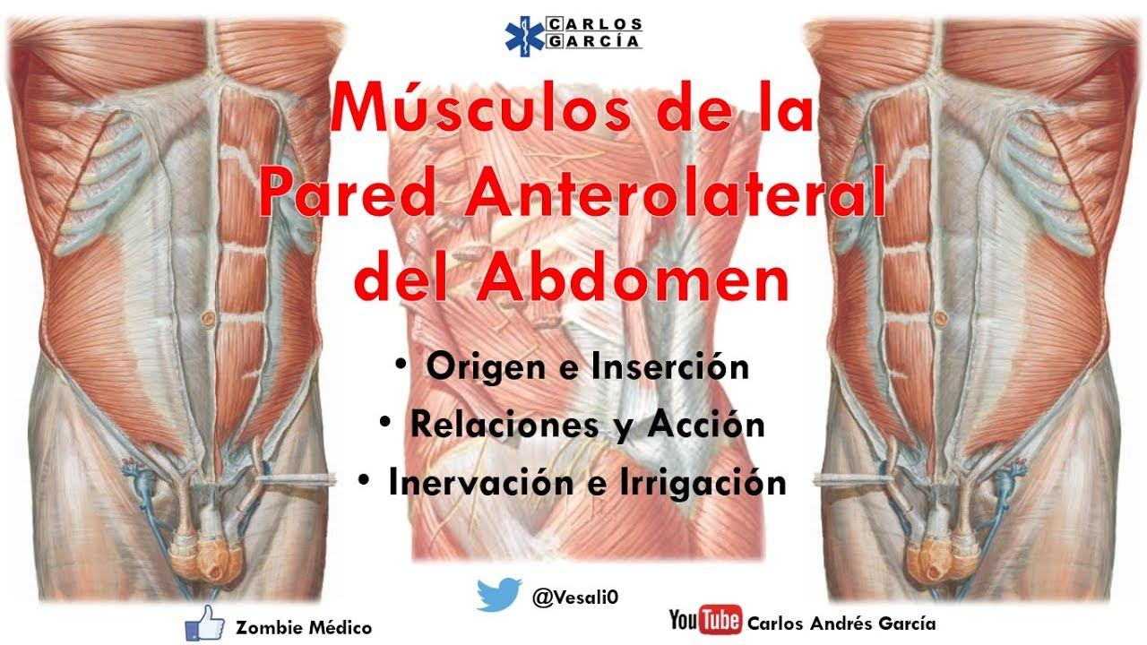 Anatomía - Músculos de la Pared Anterolateral del Abdomen (Origen ...