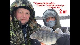 Зимняя рыбалка Окунь на 2 кг Тюменская обл Тобольский р Рекордный окунь Тюменской обл
