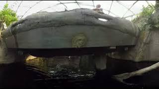 Riesenotterfütterung in 360°