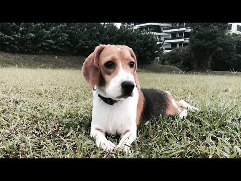 happy birthday crusty    dog film ・゚: *✧