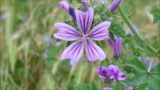 219. Flori de camp