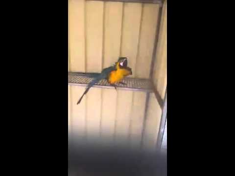 Danielle Louise Kingdon A parrot fun Beautiful Parrots omg.Amaizing Video