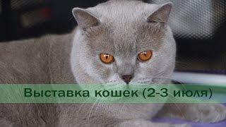 Выставка кошек (2-3 июля). Минск