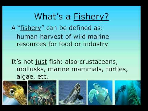 Fisheries Management Intro Part 1