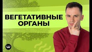 Вегетативные органы | ЕГЭ Биология | Даниил Дарвин