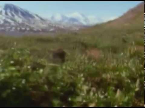 Wildlife - Life Bears