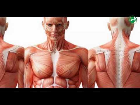Health Facts Of Sabudana   Sago Benefits   Best Diet For Health   Health Fa
