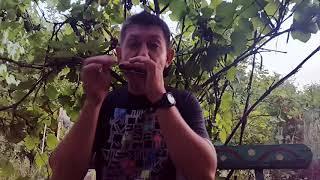 Еще раз о блюзовой импровизации на губной гармошке.Урок № 27. How to play the blues on the harmonica