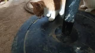 고양이한테 오리고기 주기