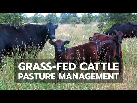Grass-Fed Cattle Pasture Management