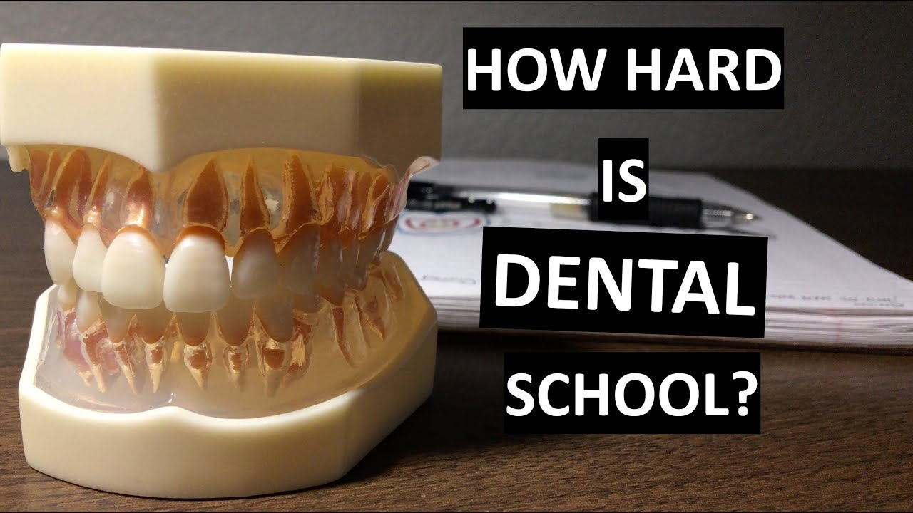 How Hard is DENTAL SCHOOL? (compared to undergrad) - YouTube